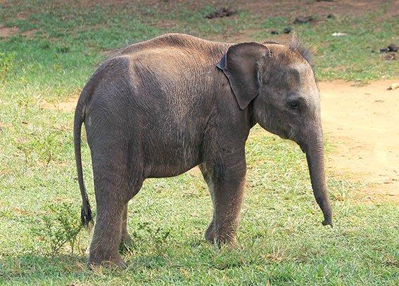 Babyolifantje Jasmine