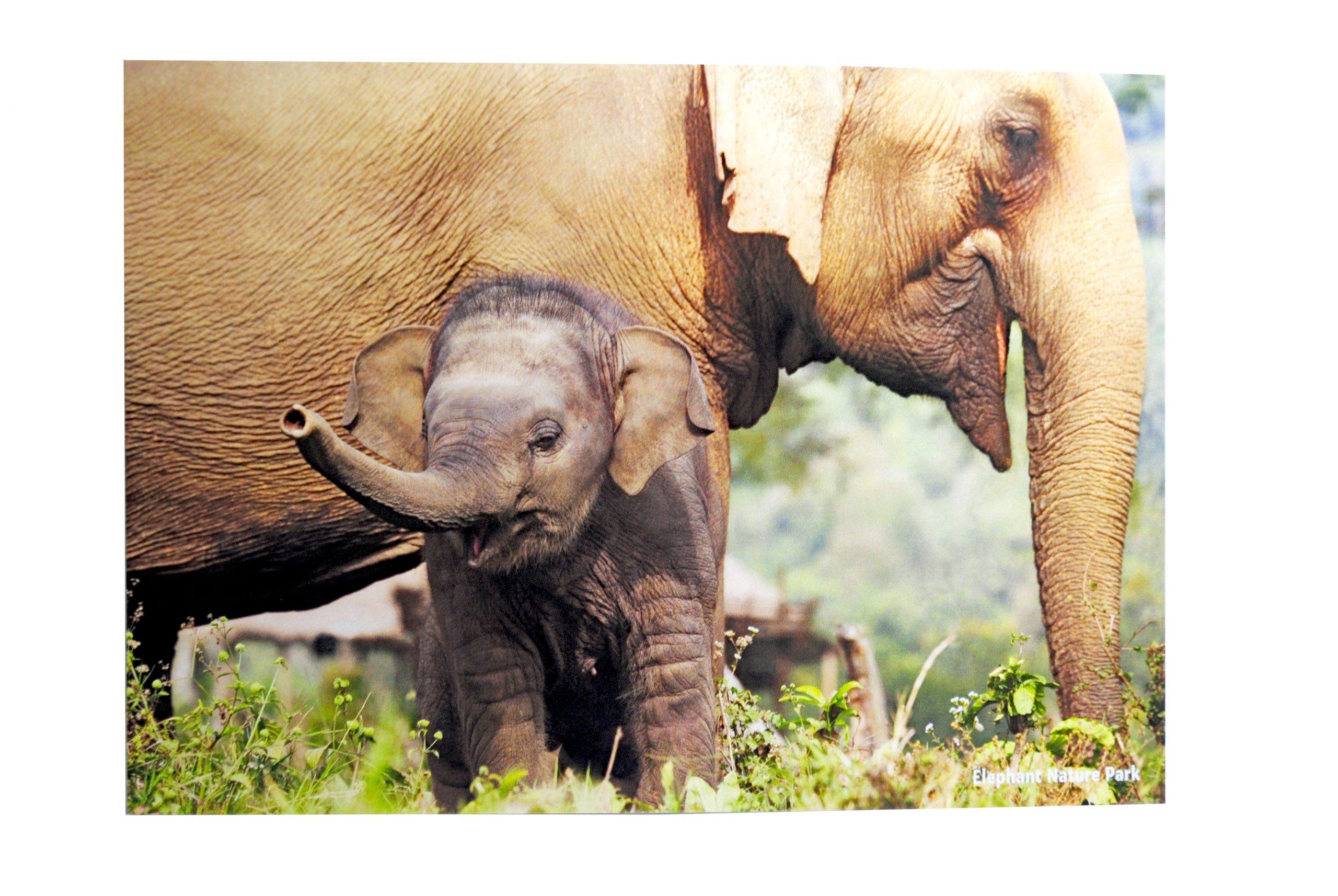 Kaart 10 Babyolifantje Met Moeder