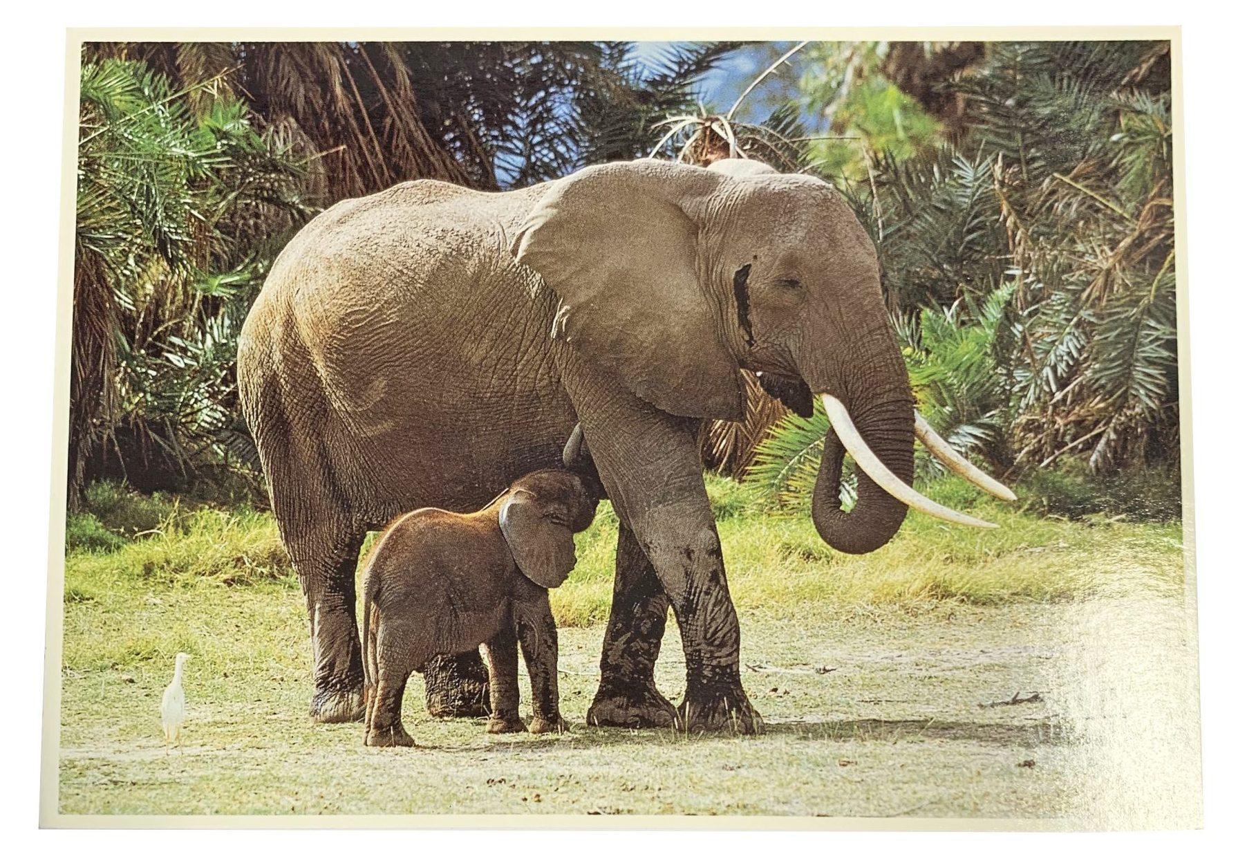 Kaart Jungle Moeder En Baby