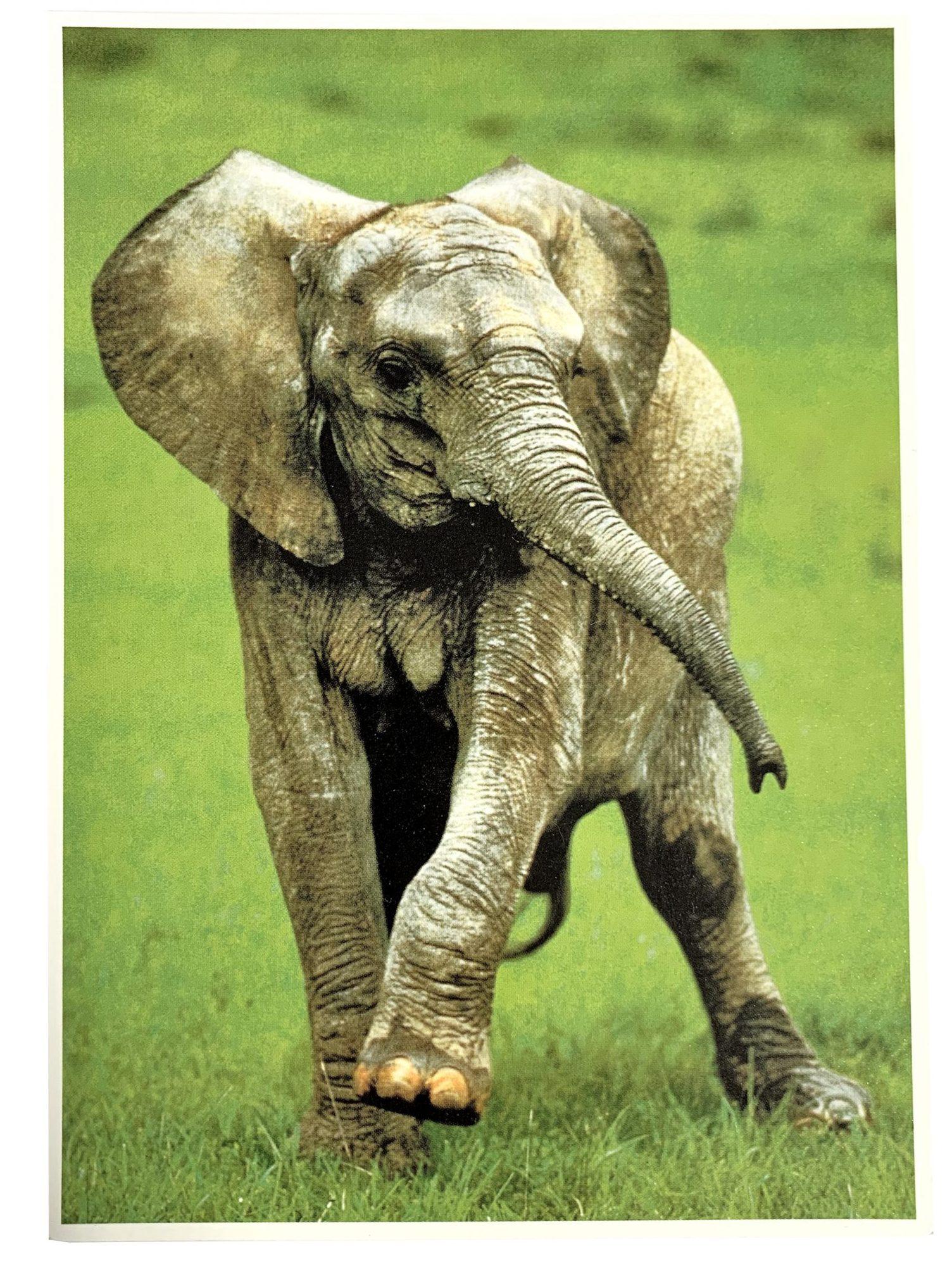 Kaart Babyolifantje In Het Gras