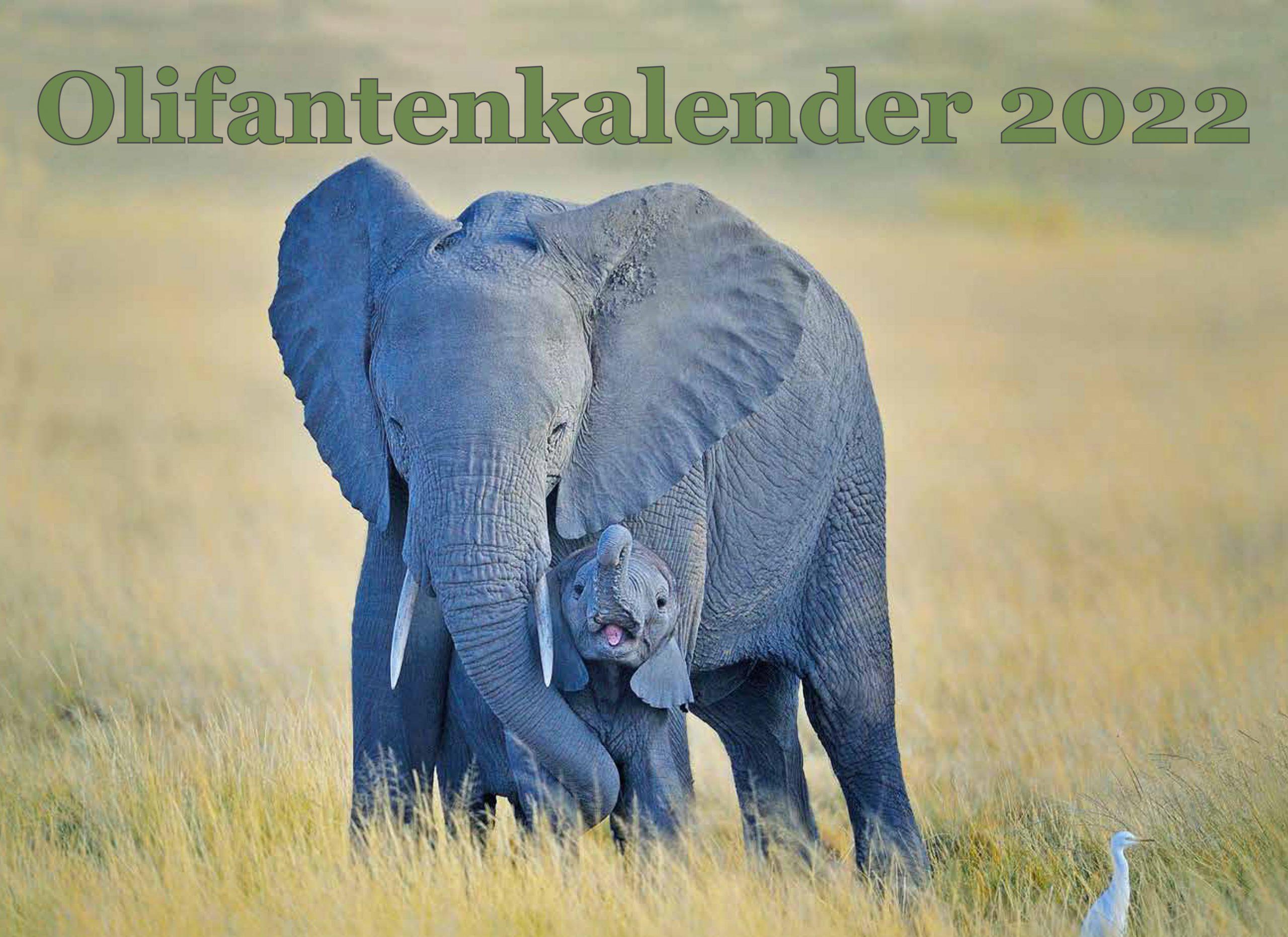 Olifantenkalender 2022